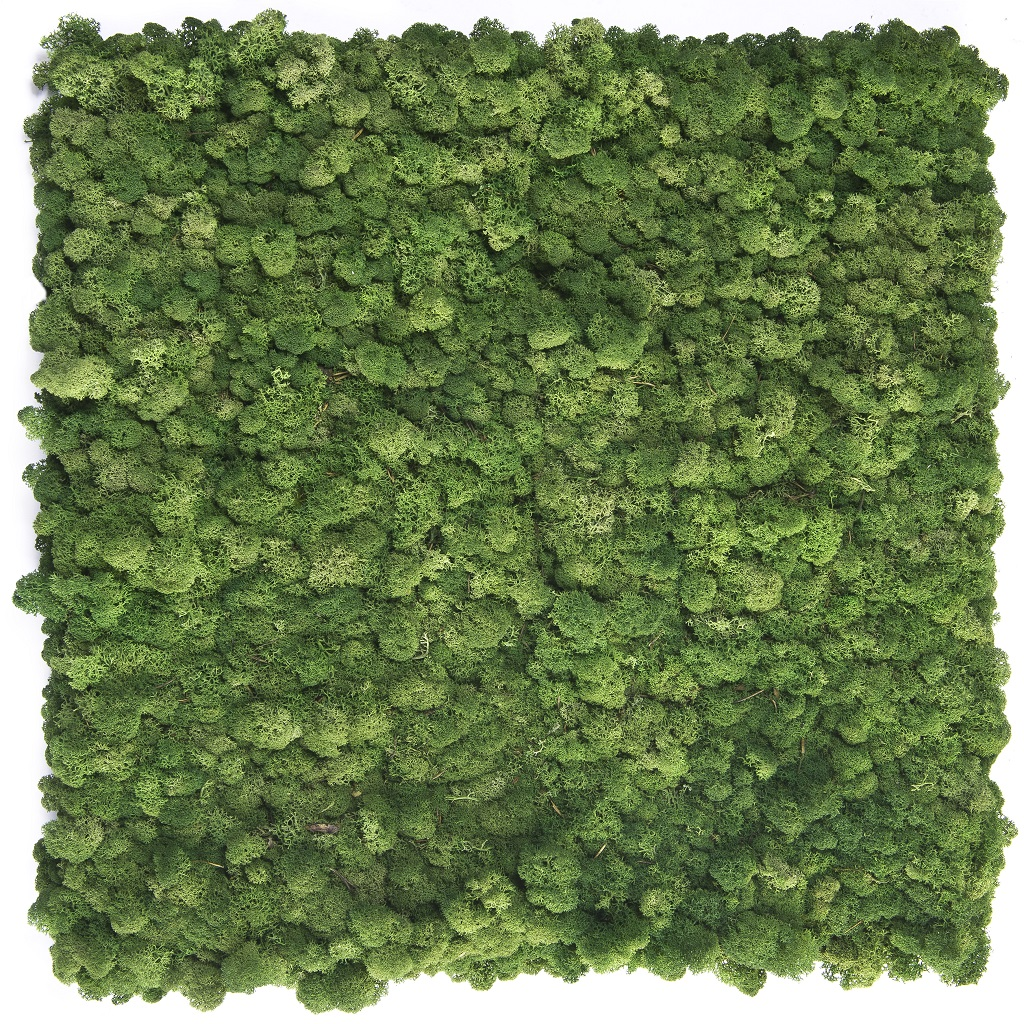 greenwalls  noors rendiermos